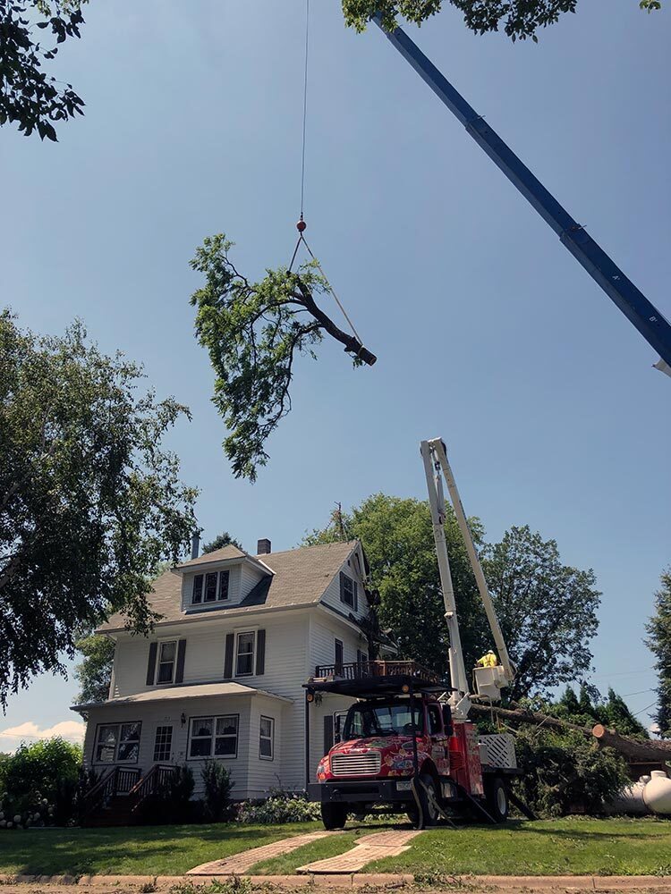 Storm damage crane assisted tree removal in Frost MN